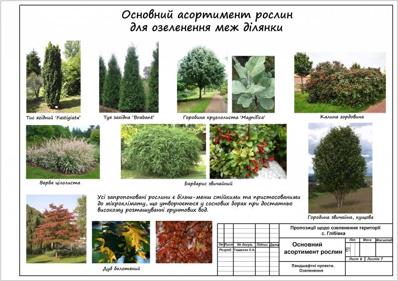 6Основний посадковий матеріал для озеленення меж