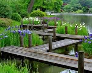 Ирисы в японском саду