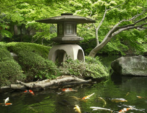 Карпы кои в японском саду