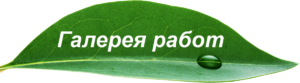 Кнопка-лист5