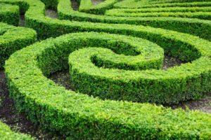 175342-850x566-garden-maze